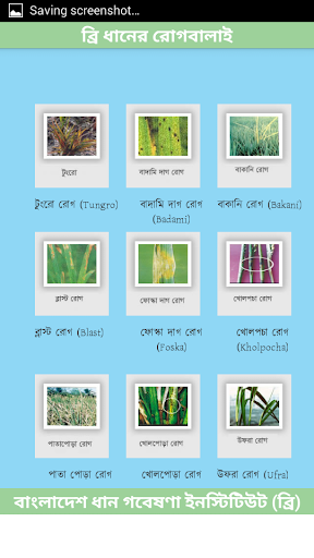 BRRI Rice Diseases Bangladesh