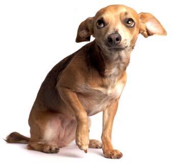 Cães medrosos - Leau Pet