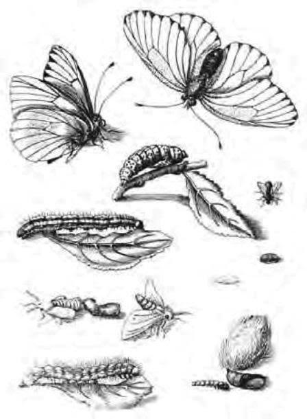 αγάπη έντομα που χρονολογούνται από το UK δωρεάν online ιστοσελίδες γνωριμιών στην Κένυα