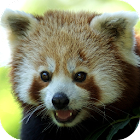 Animal Wallpapers icon