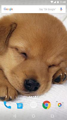 Dogs Wallpapers - screenshot