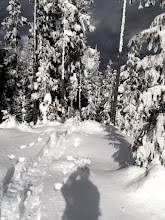 Photo: New Snowshoe trail