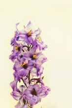 Photo: 'she dreamed in color and designed a world where love was inevitable.' - r.m.drake   http://www.redbubble.com/people/inspiraimage/works/17055015-purple-larkspur-delphinium  +ColorsOnFriday curated by +Karsten Meyer +Britta Rogge #ColorsOnFriday  +FeelGoodFriday curated by +Rebecca Borg +Jason Borg #FeelGoodFriday  +FloralFriday curated by +Tamara Pruessner +Beth Akerman +Eustace James +Kiki Nelson #floralfriday  +FlowerFriday curated by +Angie Davila +//flower colors// curated by +angelic labru #flowercolors  +EVERYDAY THINGS curated by +luca lancieri +FLOWER POWER curated by +Edith Kukla #flowerpower  +HQSP Flowers curated by +Anja Wessels +kaatje jansen +Melania Pierce +Kanlaya Chungsangornpornsuk +Wayne Lu +Iva Pas #hqspflowers  +NATURE & MACRO Photos curated by +Robert SKREINER +Roswitha Böhmer #naturephotos  +***** curated by +Ray Bilcliff #paintography  +PurpleCircle curated by +Lynn Langmade +Sinead Sam McKeown +Craig Szymanski +Alexis Coram #PurpleCircle  +Summer Photos curated by +Tiina Niskanen +Andreas Helbig #summerphotos  #PhotoManiaUK +Photo Mania UK curated by +Hans-Juergen Werner and +Chandro Ji #larkspur  #delphinium  #flower