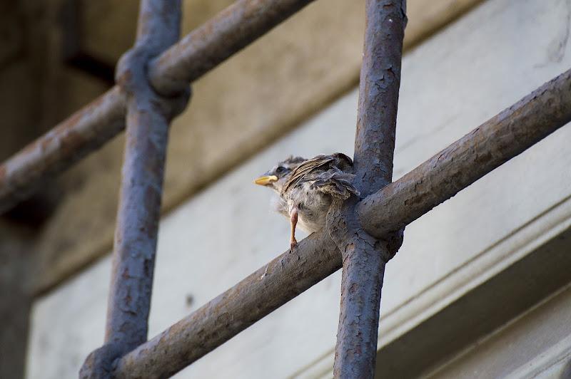 sulle ali della libertà di lascardi