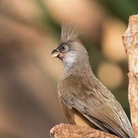by Thomas Berwein - Animals Birds ( bird, animal, vienna )