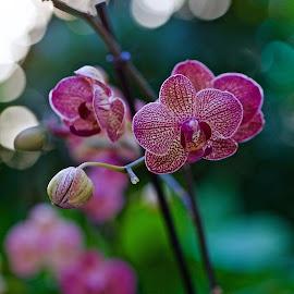 Orchidea by Fabrizio Reali - Flowers Flower Gardens ( canon, macro, orchid, nature, orchidea, flowers, photo,  )