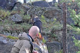 Photo: Argus sporer opp steinrøysa