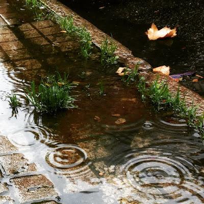 Anarchia pluviale di tamara ottaviani