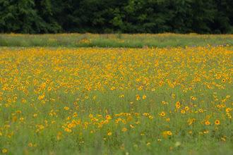 Photo: the wildflowers were wild!