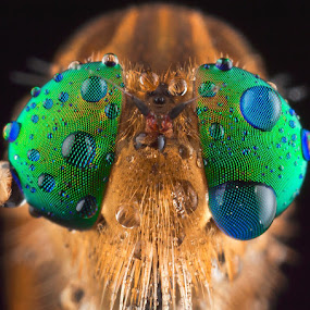 Look to My Eyes..... by Vincent Sinaga - Animals Insects & Spiders
