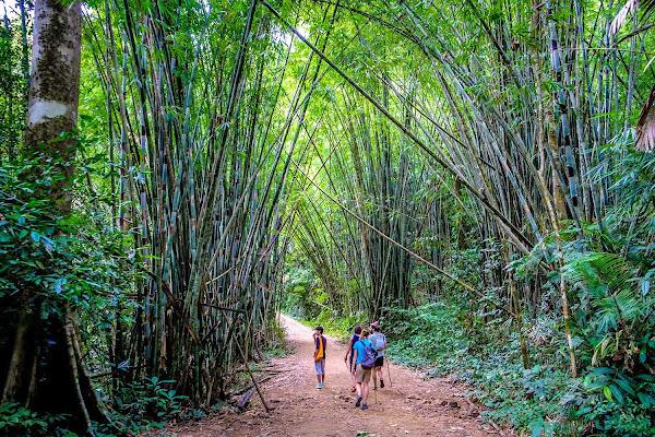 Trek through Khao Sok National Park