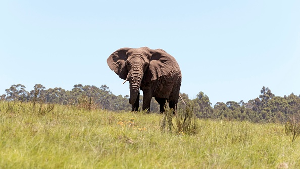 Get up close and personal with these majestic creatures at the Knysna Elephant Park.