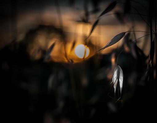 .........Backlight...! di Ione