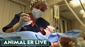 Animal ER Live thumbnail