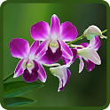 Orchids Live Wallpapers icon