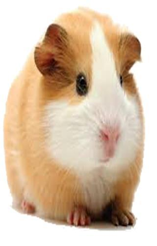Hamster Photo Stickers