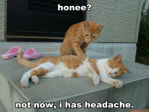 honee not now i has headache