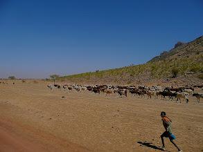 Photo: Herden als ständige Begleiter