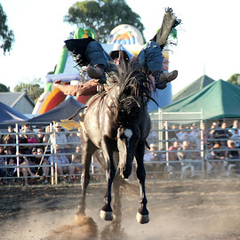 Off Balance by Jan Dance - Sports & Fitness Rodeo/Bull Riding (  )