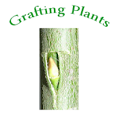 Learning Grafting Plants