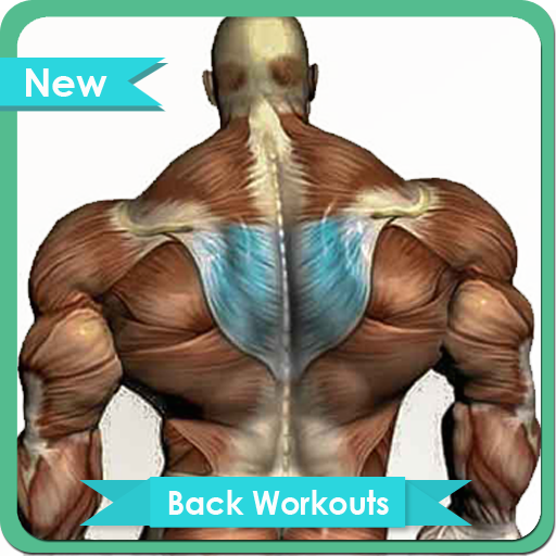 Back Workouts