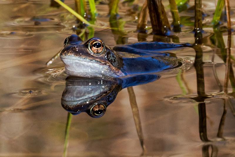 La rana che si specchia di LucaMonego