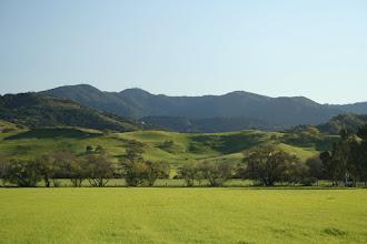 Photo: More springtime greenery