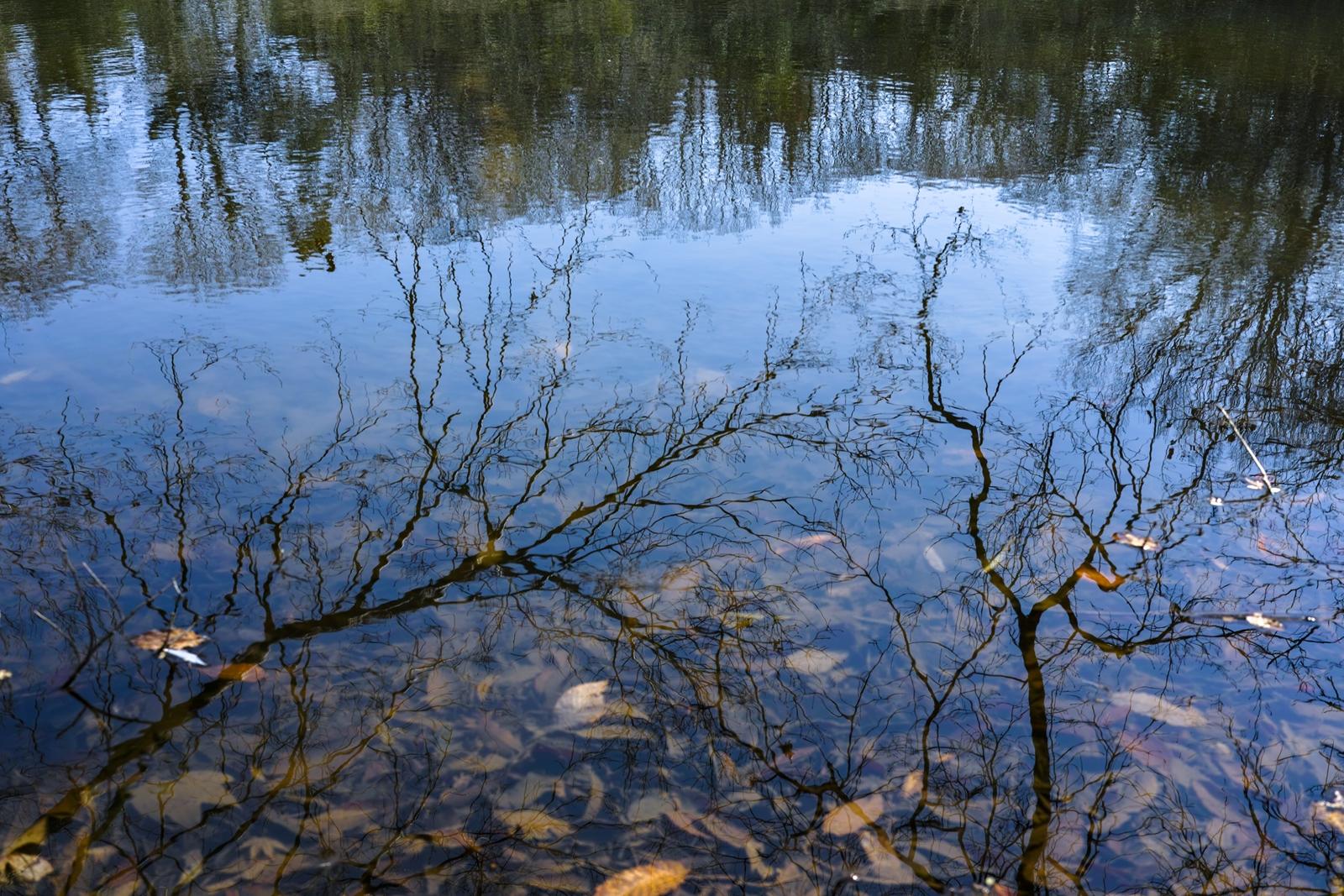 Photo: 「巡る」 / Life cycle.  巡る巡る 永久の旅 またあの場所へ 青い青い 空へと向かって  SIGMA DP2 Merrill #SIGMA #DP2 #Merrill #Foveon  #landscapephotography  ( http://takafumiooshio.com/archives/822 )