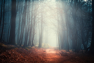 Photo: #landscape   #atmosphere   #forest  the quiet path http://wuestenhagen-imagery.photoshelter.com/image/I0000D0QiOvYwxCY