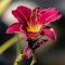 Flower 03 08 18.jpg