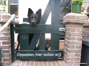 Photo: Samen de veranda bewaken