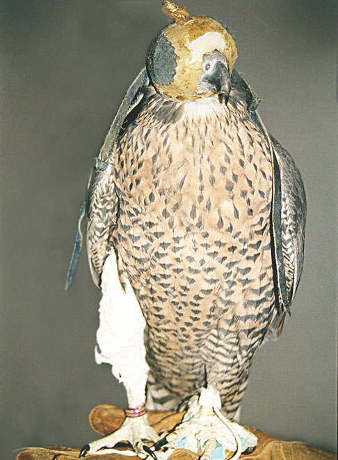 The falcon in Fig 40.16.