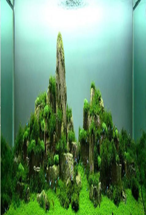 Aquascape Design 101 aquascape design - android apps on google play