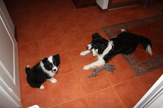 Photo: Remu ihmettelee kun Niila on ominut kaikki lelut.