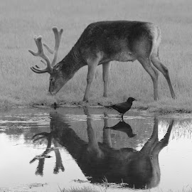 Reflections by David Walker - Black & White Animals