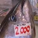沖縄釣魚図鑑 icon