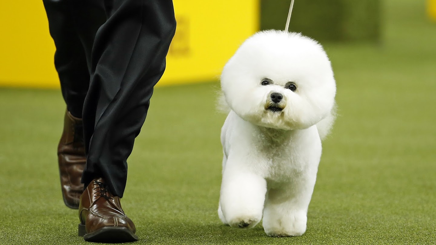 Watch Crowned: Inside the 2018 Westminster Dog Show live
