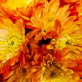 Fiery flowers. by Peter DiMarco - Flowers Single Flower ( floral, orange flower, flowers, flor, flowering )