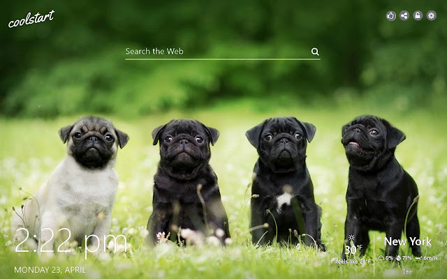 Cute Pugs HD Wallpapers Dogs Puppies Theme