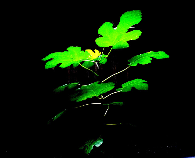 Light... Nature and Silhouette di alansa