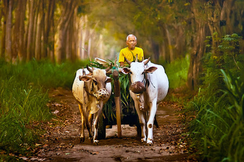 by Wb Wilapa - People Portraits of Men ( animals, forest, senior citizen, man )