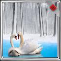 Swan Wallpaper icon