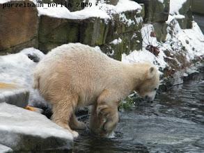 Photo: Was mag Interessantes im Wasser sein ?