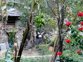 Photo: Bananen...