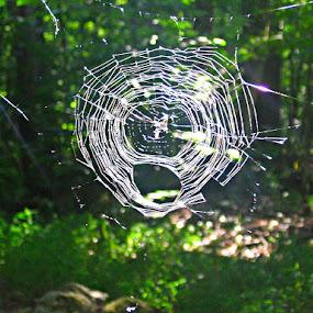 by Karen Carnahan - Nature Up Close Webs