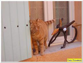 Photo: Miaou ...