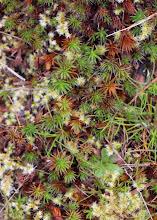 Photo: Mosses