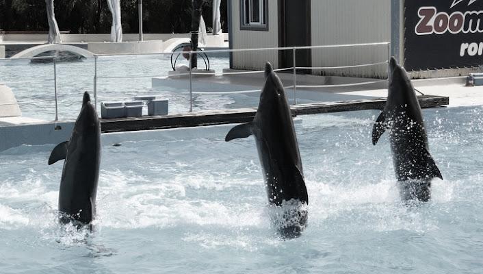 Delfini di Gillio