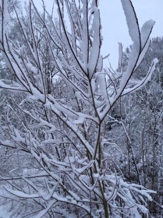 De eerste sneeuw