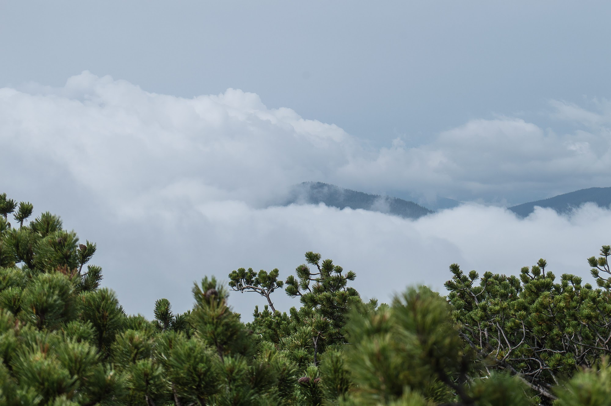 Туман в горах